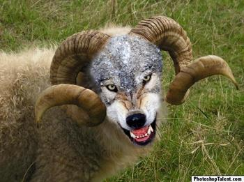 Wolf_in_sheep
